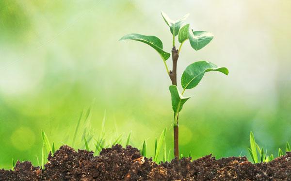 土壤环境治理