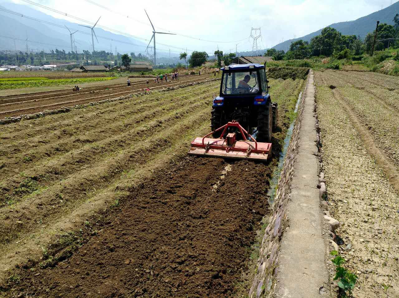 德昌烟蒜轮作地土壤重金属污染修复及病虫害防治试验项目